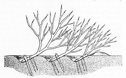 Пример засеки
